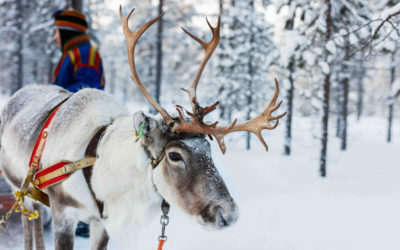 On Dasher, on Dancer, on Prancer and Vixen…